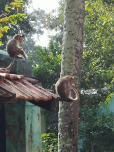 Monkeys at the SKF site in Bangalore, India.